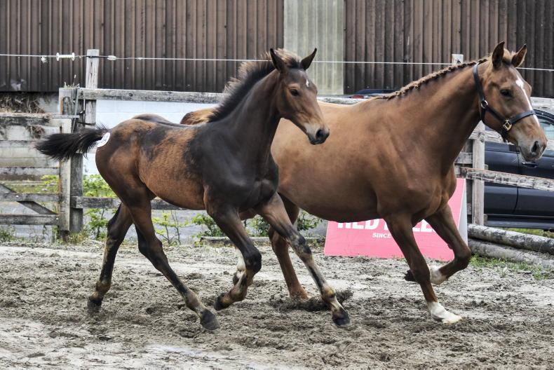 SALES: Breeders' foal sale exceeds expectations