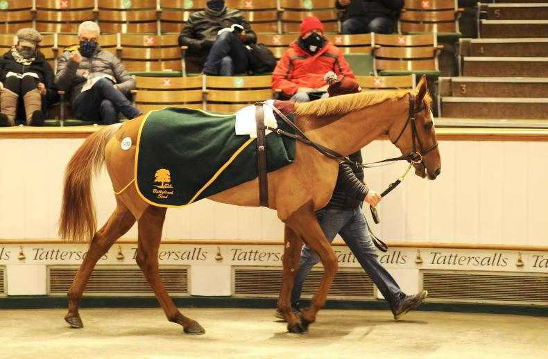 SALES: Aunty Bridy heads opening day of December Mare Sale