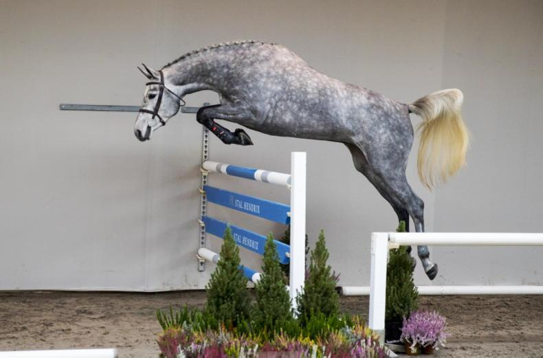 SHOW JUMPING: Gallant Irish team just pipped to Nations Cup win