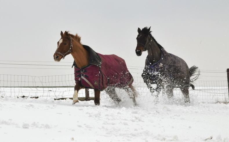 HORSE SENSE: Is your yard ready for the hard frost?
