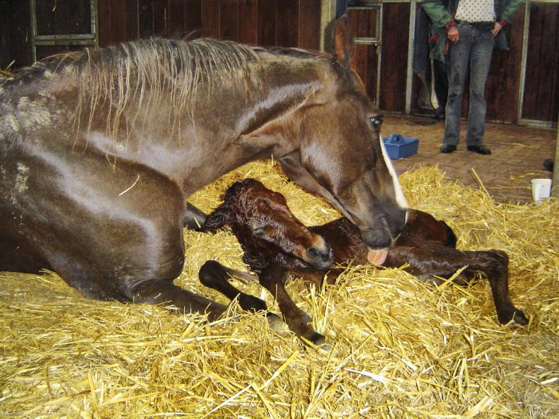 FOALING FEATURE 2021: Foal preparation and postnatal care
