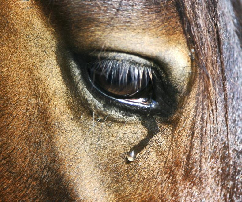 HORSE SENSE: Strict biosecurity measures key in controlling EHV outbreak