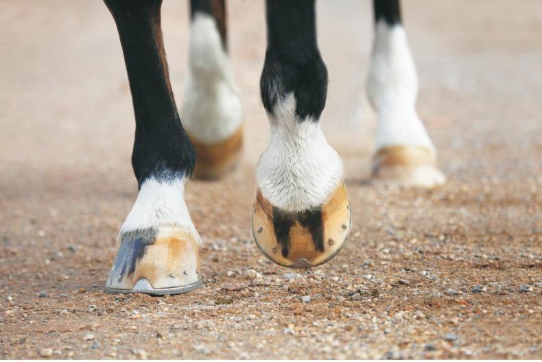 HOOFCARE FEATURE 2021: No hoof, no horse