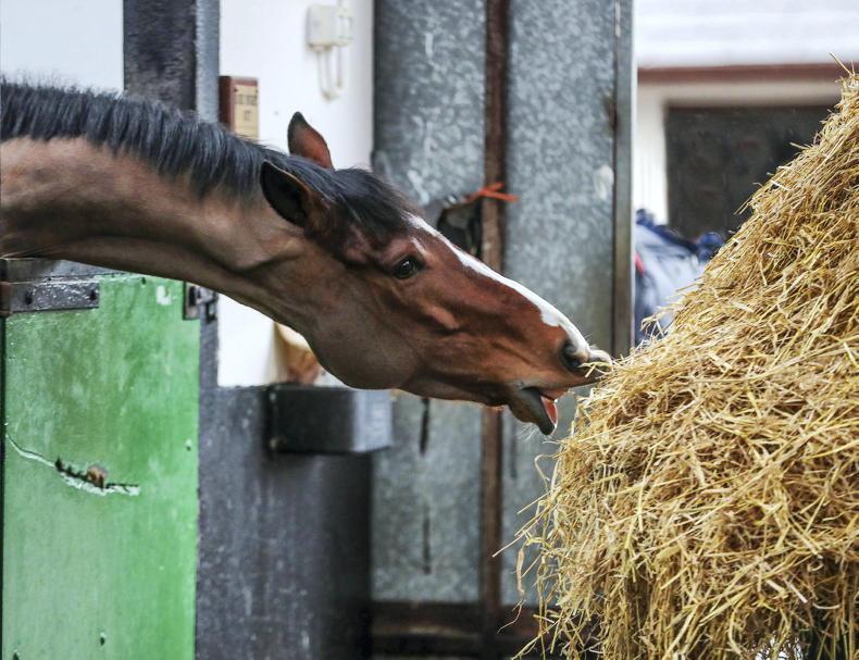 HORSE SENSE: Feeding your horse for optimal performance