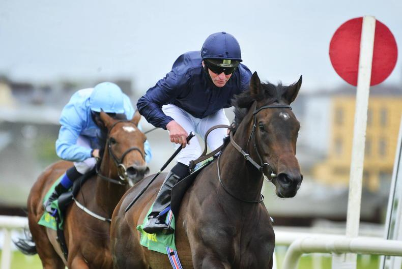 DOWN ROYAL PREVIEW: Back O'Brien's Castle to be King of the North