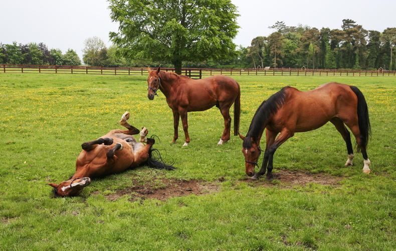HORSE SENSE: Correct animal management essential during Ireland's heatwave