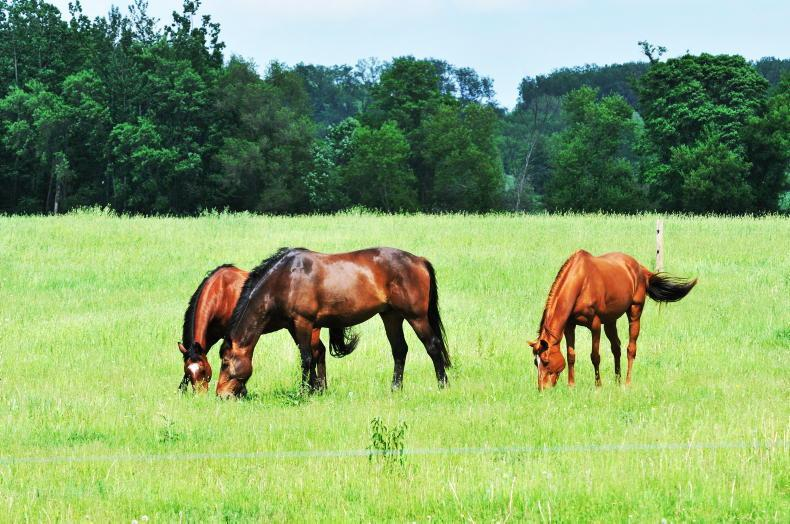 HORSE SENSE: Getting the balance right with weanlings