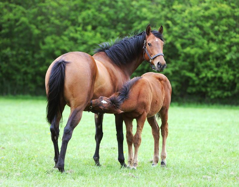 HORSE SENSE: Four steps to build rideabilty