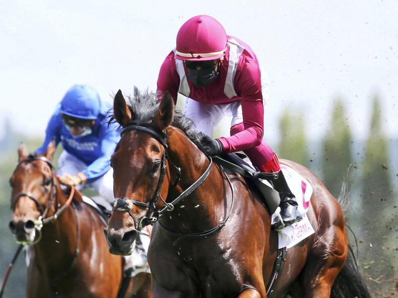 Breeders' Cup Classic option for Mishriff