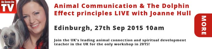 Animal Communication & The Dolphin Effect principles LIVE with Joanne Hull