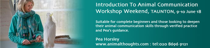 TAUNTON Animal Communication Workshop
