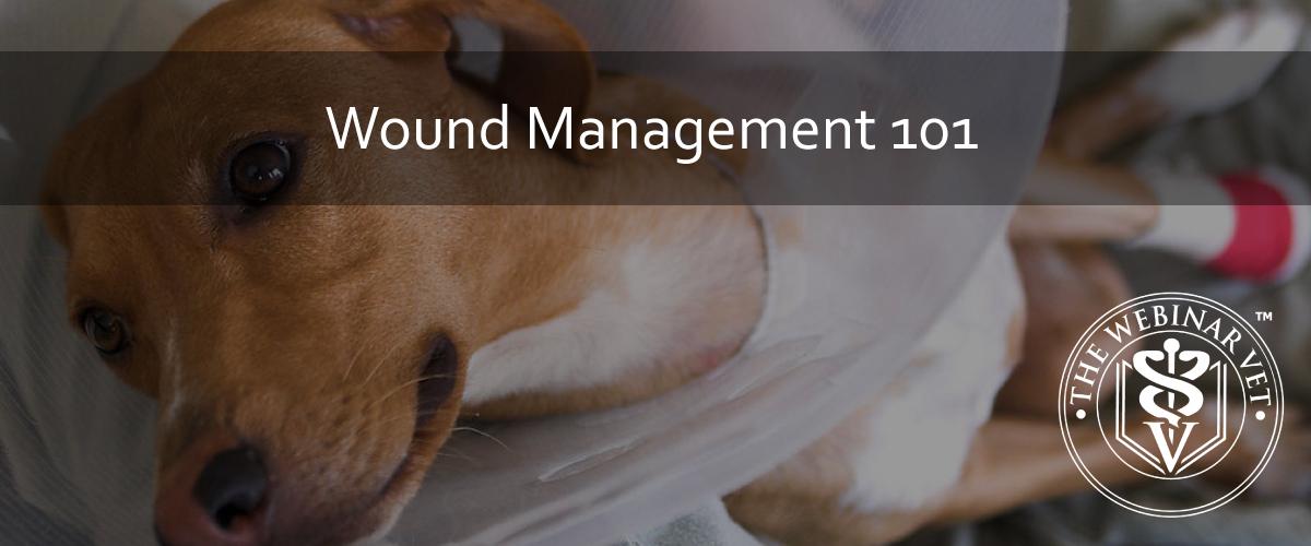 BlogWoundManagement