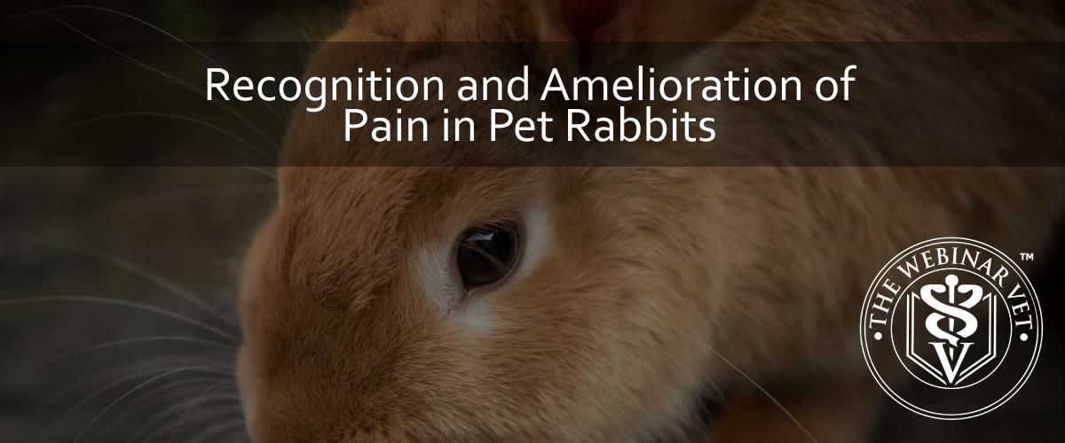 Blog_Rabbit