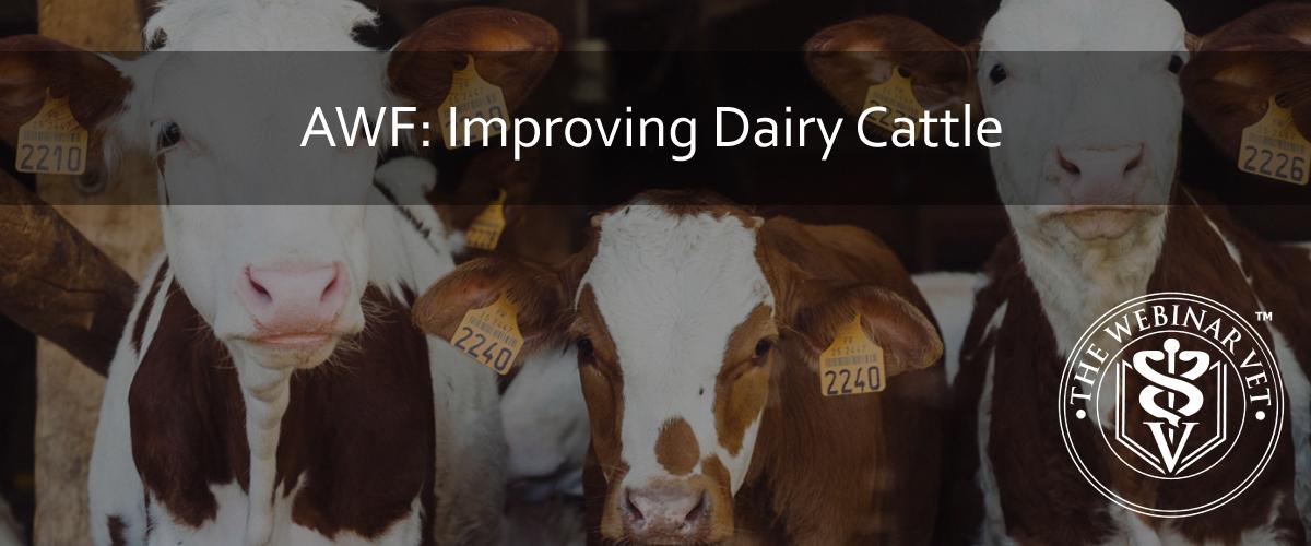 AWF: Improving Dairy Cattle Welfare - The Webinar Vet
