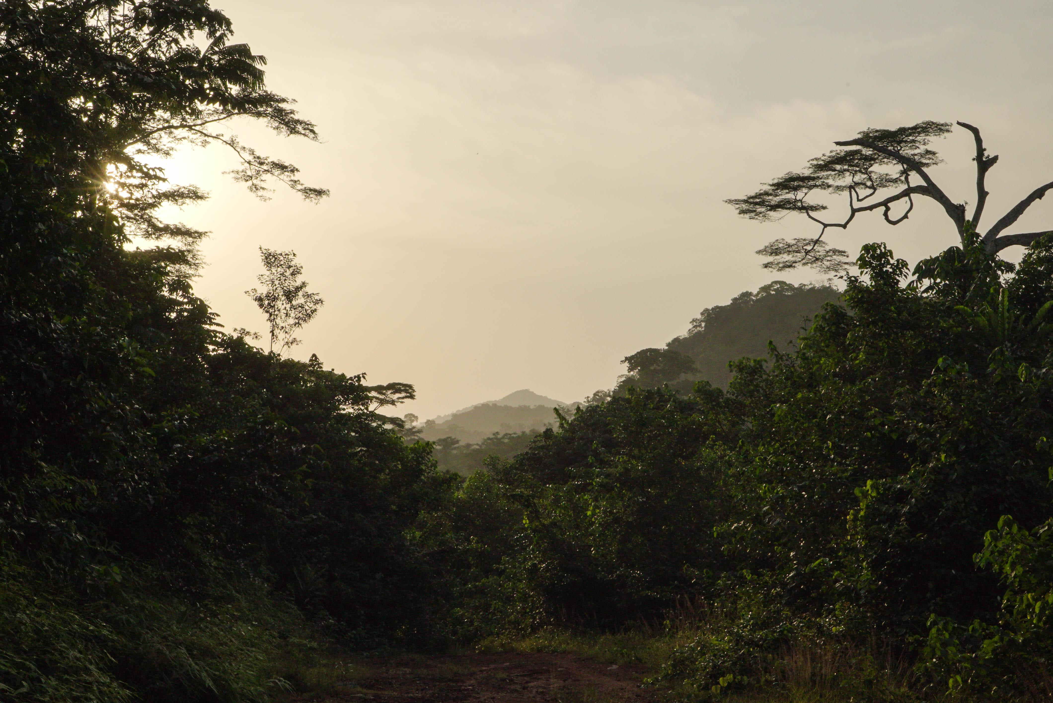 Garwin Forests