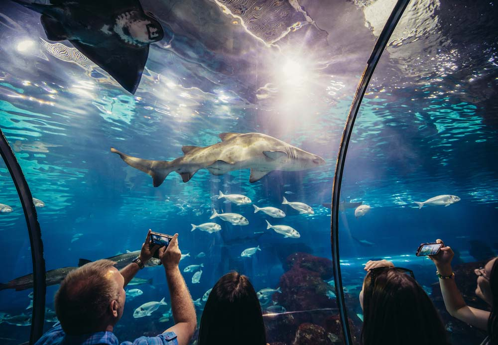 The aquarium is great for Barcelona with kids