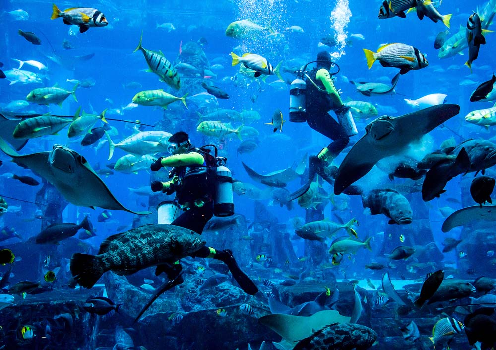 Stop at the Dubai Aquarium if you've got 48 hours in Dubai