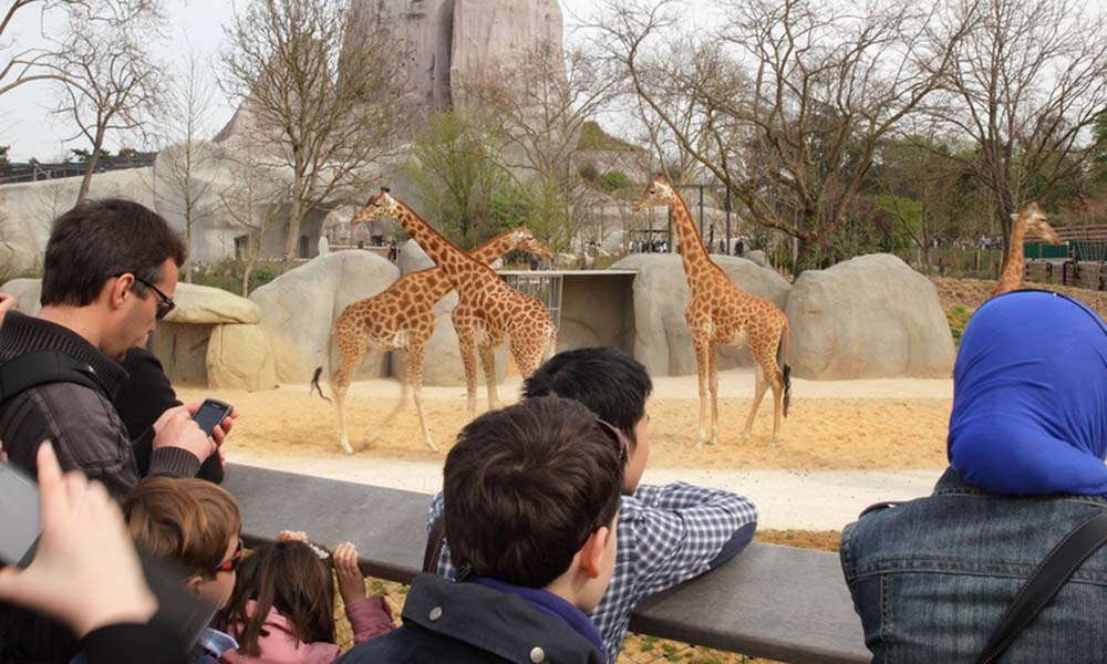 7 fun things to do in Paris with kids: Paris Zoo