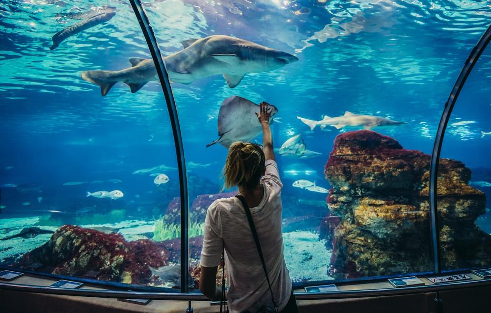 Barcelona Aquarium, fun things to do in Barcelona
