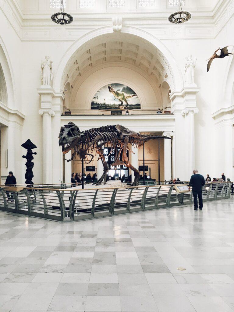 SUE, Chicago Field Museum's T-rex skeleton on display