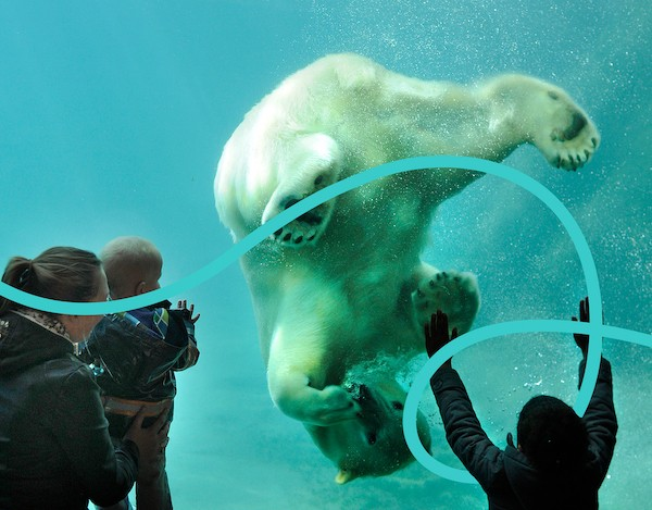A polar bear at Rotterdam Zoo