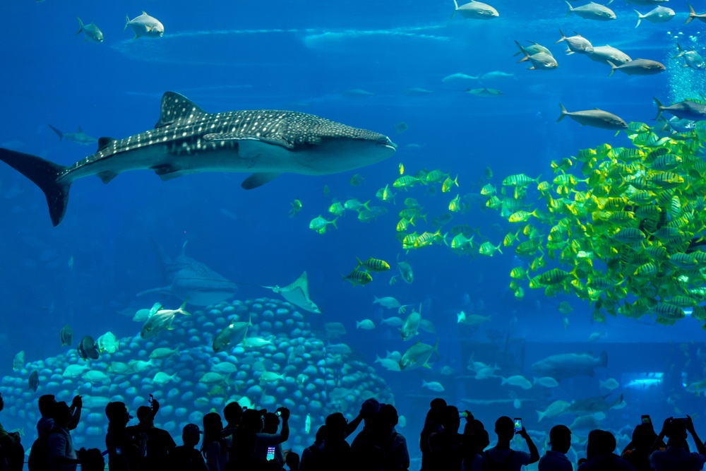 The main tank at Chimelong Ocean Kingdom, the largest aquarium in the world