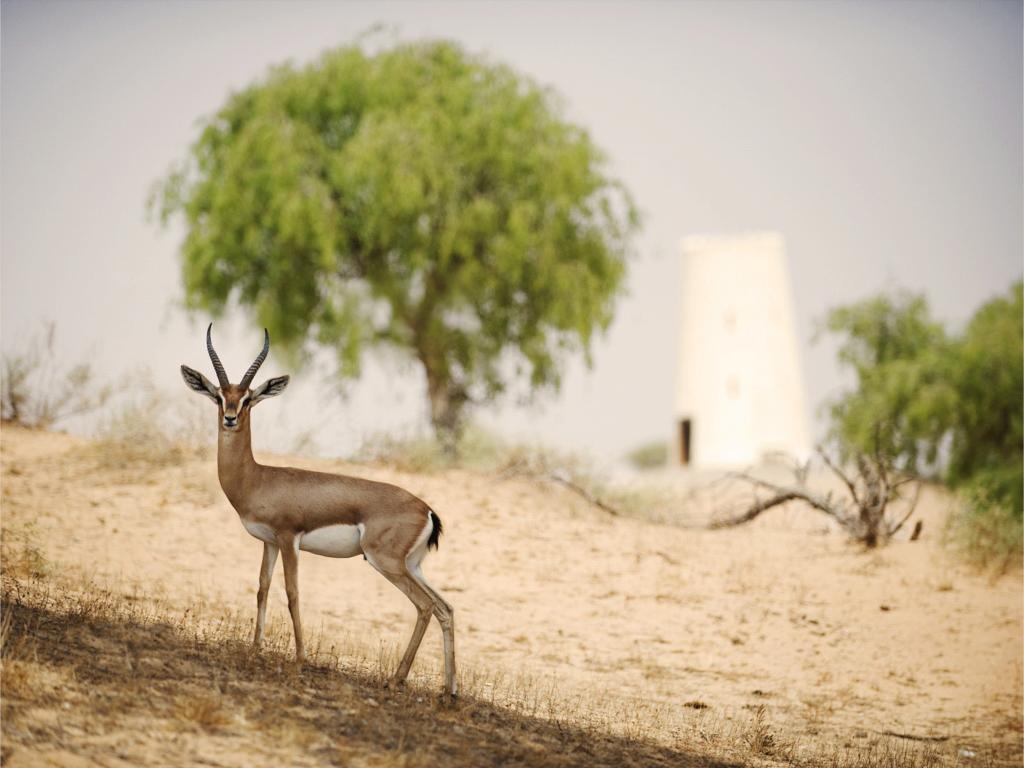 ريتز كارلتون رأس الخيمة، صحراء الوادي-4 من 42 الصور