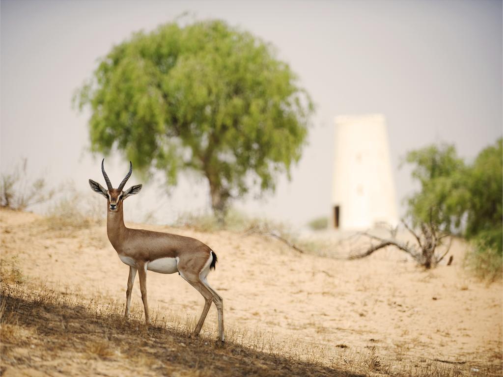 ريتز كارلتون رأس الخيمة، صحراء الوادي-22 من 42 الصور