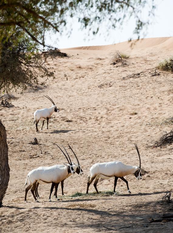 ريتز كارلتون رأس الخيمة، صحراء الوادي-5 من 42 الصور