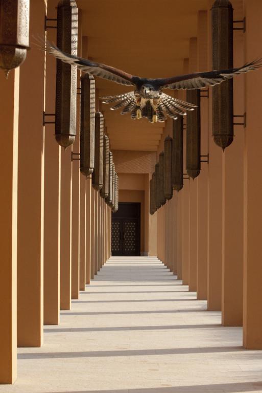 ريتز كارلتون رأس الخيمة، صحراء الوادي-10 من 42 الصور