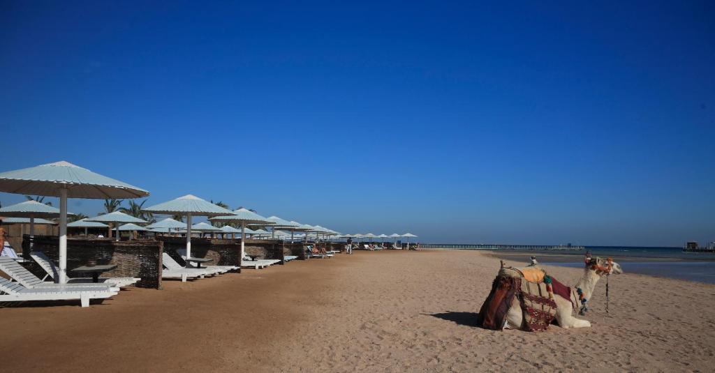 Pharaoh Azur Resort-46 من 46 الصور