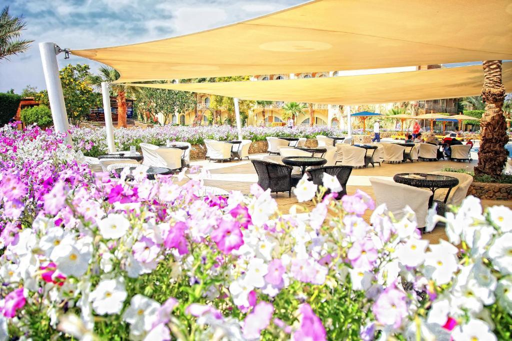فندق دزرت روز-40 من 46 الصور