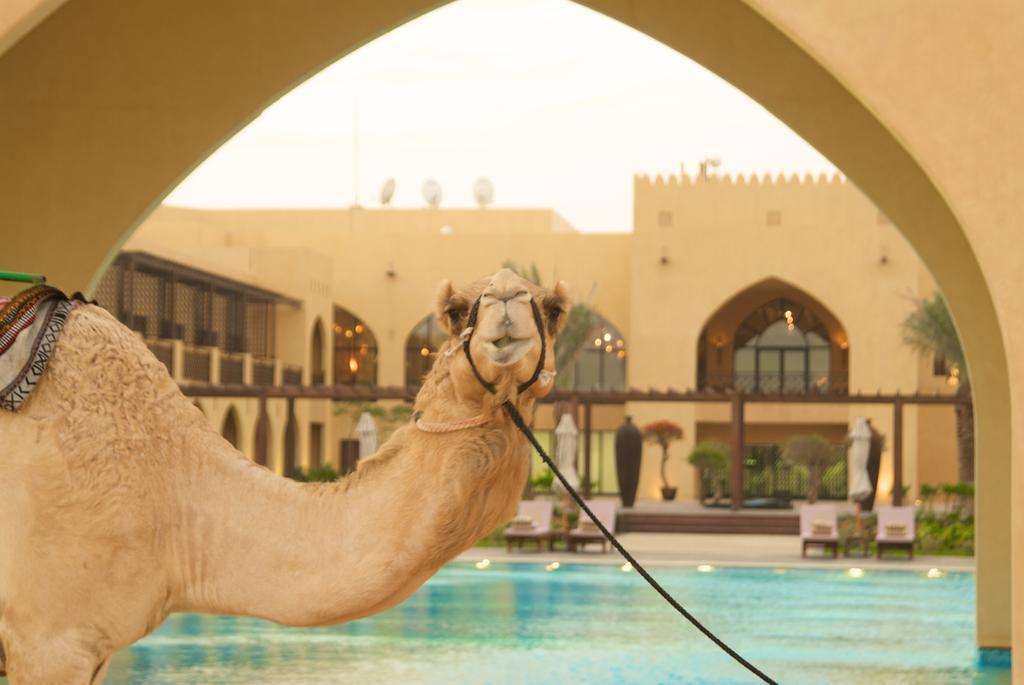 فندق تلال ليوا - مدينة زايد-16 من 46 الصور