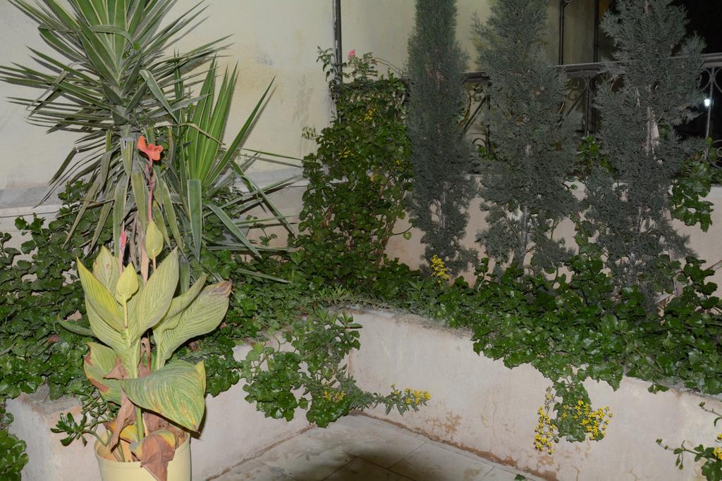 jasmine leaves-27 of 41 photos