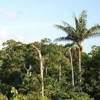 Dschungelcamper