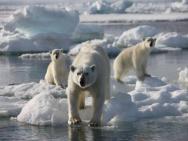 Svalbard Lodge – zdjęcie 33
