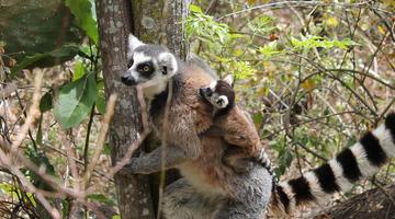 Viaggio di nozze in Madagascar: 5 cose da vedere