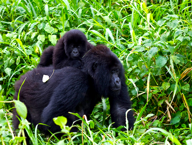 NGOs issue plea for Virunga