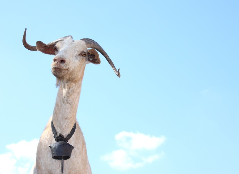 Meat-Eaters: What gets your Goat?