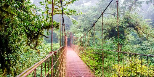 Costa Rica: 7 Night Nature Adventure Guided Tour with Flights, Accommodation & Excursions