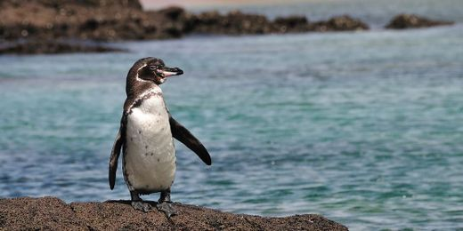 Exploring the Galapagos: 10 Nt Escorted Tour Incl. Flights, Accommodation & Excursions