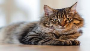 3674a3e37db0 Αδέσποτες Γάτες Ειδήσεις - Όλα τα νέα από το topics.gr