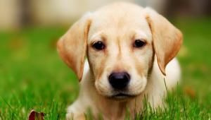 2bc16889c660 Πώς πρέπει να μιλάτε στα σκυλάκια σας σύμφωνα με την επιστήμη