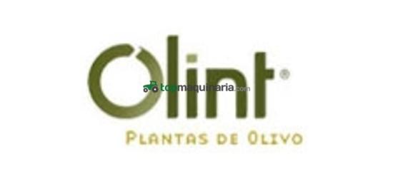 PLANTA DE VIÑA, OLIVO Y ALMENDRO
