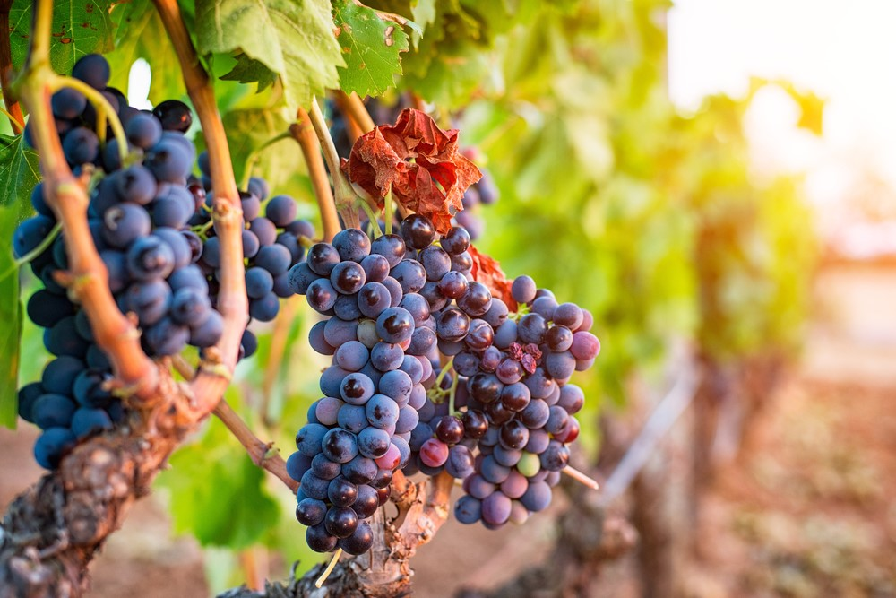 Wine and Food Tour in United Kingdom, York