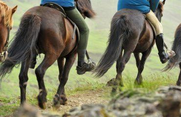 Vik Horse Riding Adventure