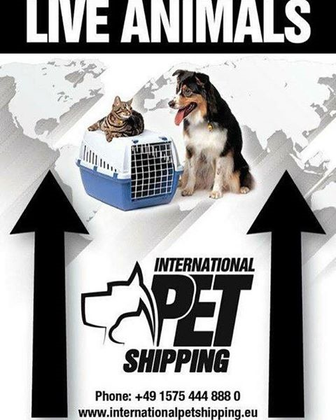Internationalpetshipping