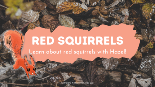Learn all about red squirrels with Hazel! image