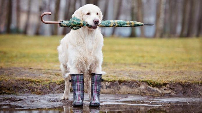Perro en la lluvia