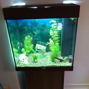 120 L Jewel akvarium sælges, der medfø - Viborg - 120 L Jewel akvarium sælges, der medfølger sten, kranie, skattekiste, træ pind og temperaturmåler. Mad til både fisk og sugemaller, pumpe til at gøre sten rene med. Akvariet er i mørkt bøg. - Viborg
